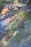 Woodland Stream in Fall