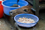 Sapa market -- cow's head and intestines