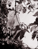 Scan12190.jpg