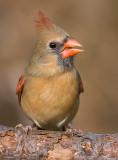 cardinal 297