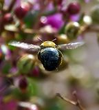 Bee-hiney