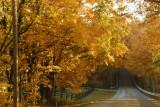 autumn lane.jpg