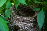 Empty Nest Syndrome.