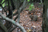 Camouflaged Bunny Visits Wolf Gap.