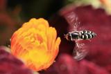 Bee MacroJuly 3, 2008