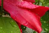 Water Drops MacroJuly 27, 2008