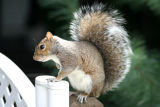 September 21, 2006Squirrel