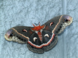 butterflys_moths