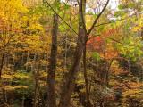 Trees-6439
