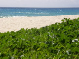 Blue, white and green at Anse Louis