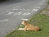 Waiting for the bus - Anse Volbert Village