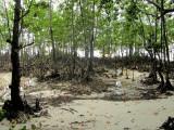 Mangroves near Anse Takamaka