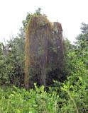 Vegetation - Anse Posession