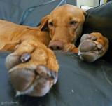 Pausing Paws