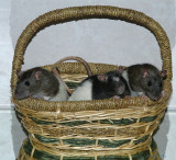 Basketful of Pocket Pals