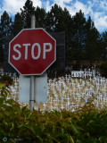 Crosses of Lafayette      War Memorial 7- 4-08        (video Buffy St. Marie)