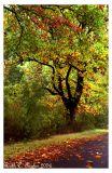 2006 Rainy Autumn Days