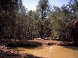 Muddy pool