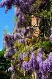 Flowerisch
