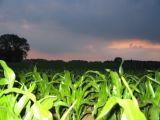 Scary Corn