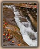 Fallen Leaves by Stream