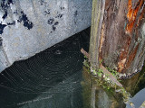 Weir, wood, water, web
