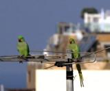 ta birdies1_sitting pretty.jpg