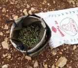 Olive Oil 2009 - From Picking to Pouring