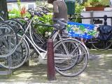 ams bike flowers.JPG