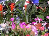 flowers zion sq1.JPG