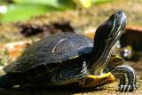 turtle close.JPG