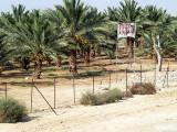 date palms road.JPG