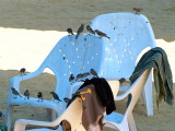 birds beach chair.JPG