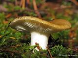 Fungus Wb.jpg