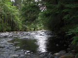 Little Qualicum River 4.jpg