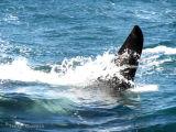 Orca 9.jpg