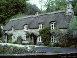 Buckland in Moor thached roof cottage.jpg