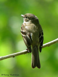 Least Flycatcher 7a.jpg