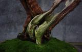 bonsai bold