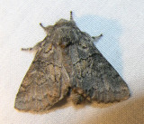 moth-150708-8.jpg