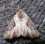 moth-150708-9.jpg