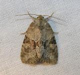moth-170708-3.jpg