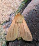 moth-170708-5.jpg