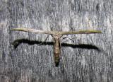 moth-170708-7.jpg