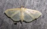moth-170708-10.jpg