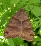 moth-july13-3.jpg