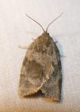 moth-08-06-2008-12.jpg