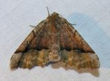 moth-08-06-2008-13.jpg