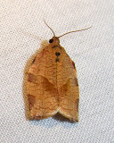 moth-15-06-2008-2.jpg