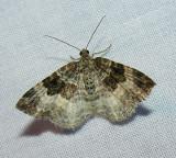 moth-15-06-2008-6.jpg